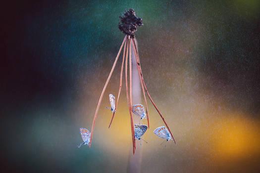 Butterfly-282