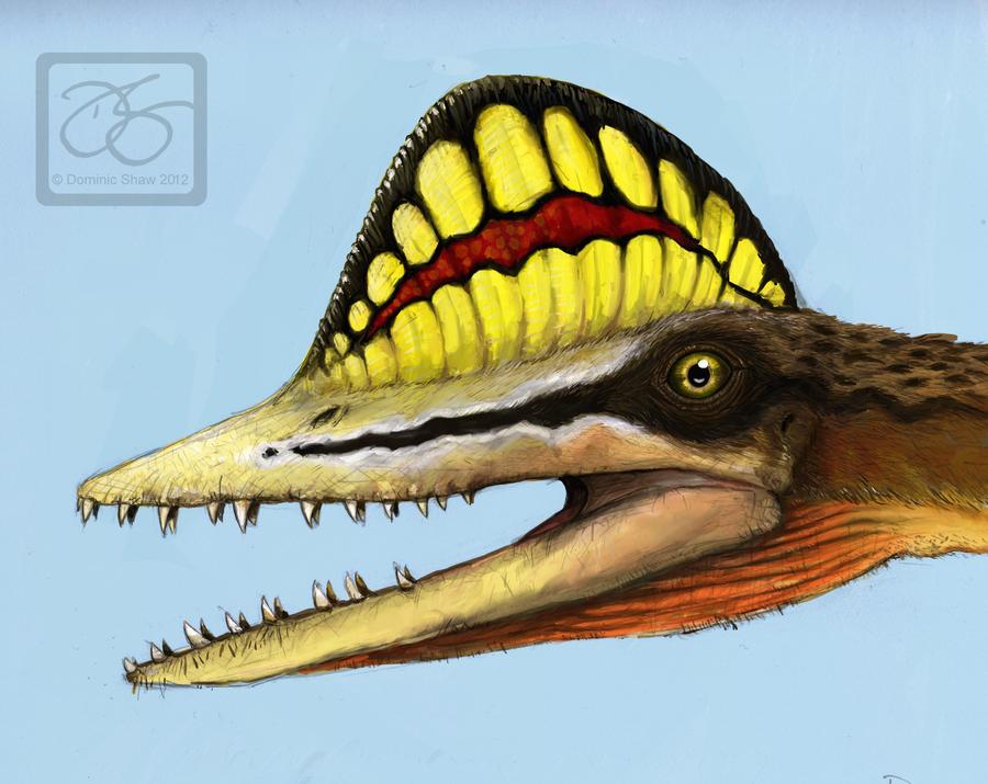 Pterorhynchus Wellnhoferi Portrait