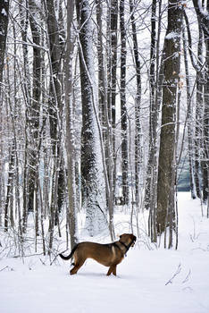 Snowy Belle