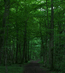 Trail by bobroid90