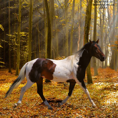 Paint Horse Pre Cut By Gallopinggamer D56qzvi-full