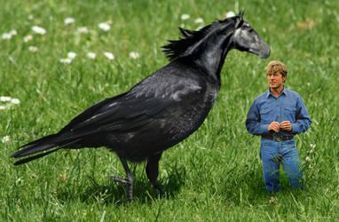 The Horse Whisperer: Nevermore