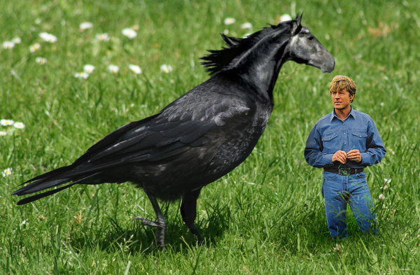 The_Horse_Whisperer__Nevermore_by_MxPwr.png
