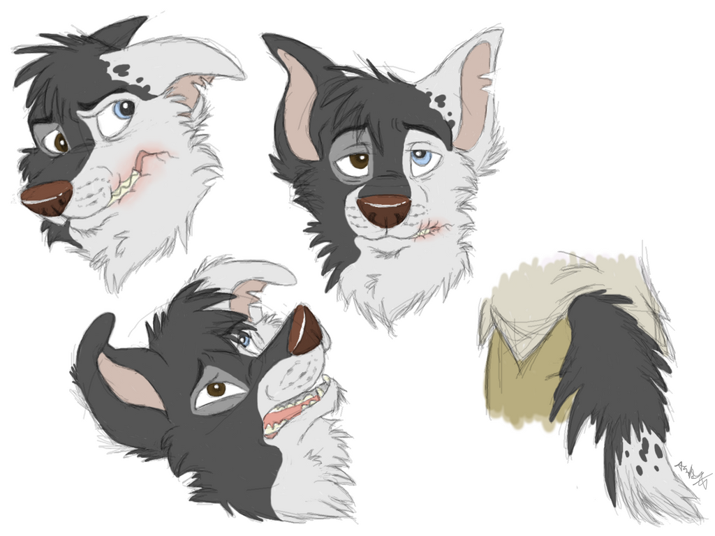 Scarred Character: As Border Collie By RaiynClowd On DeviantArt ...