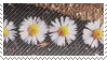Daisy Stamp by RaiynClowd