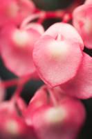 Lush by blepfo