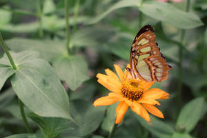 Resting Butterfly by blepfo