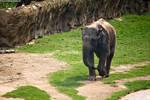 Walking Elephant by blepfo