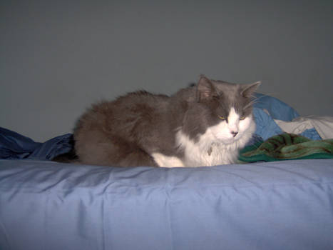 Aggie on Bed
