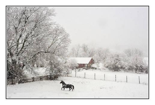 Jericho Vt Horse Farm 11-27-2018-001SM