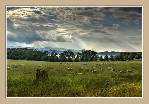 Panton Vt Arnold Rd Sheep 2020-07-01 006