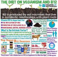 Vegan Sources Of Nutrients 006 by veganshareStock