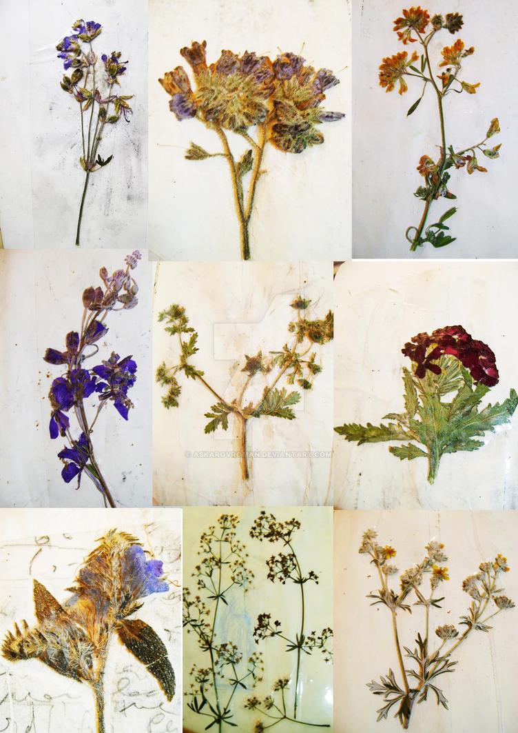 Moscow Herbarium 2017. by AskarovRoman