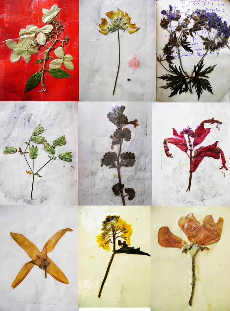Moscow Herbarium 2017 (1) by AskarovRoman