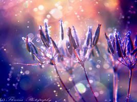 Purple touch by Floreina-Photography