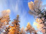 Scandinavian winter 6