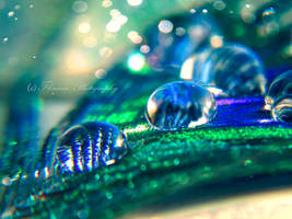 Peacock dance by Floreina-Photography