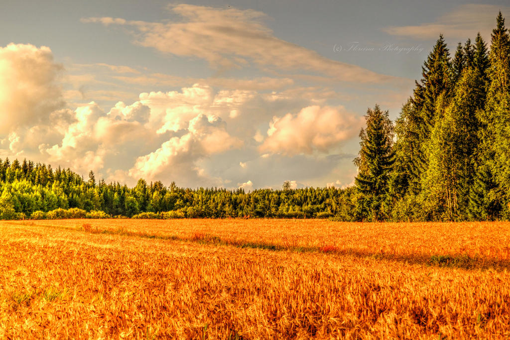 Late Summer