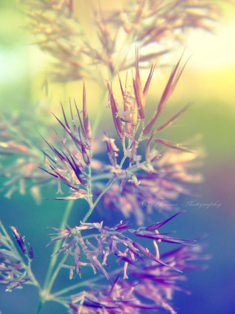 Pastel tones by Floreina-Photography