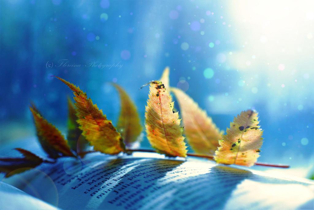 Autumn dreams by Floreina-Photography