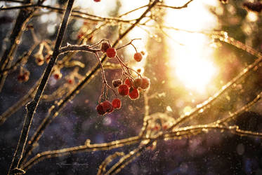Winter light by Floreina-Photography