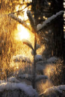 Golden snow by Floreina-Photography