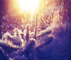 Snow explosion by Floreina-Photography