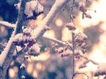 Towards spring