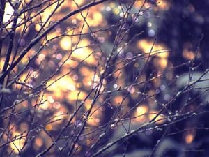 Spring light by Floreina-Photography