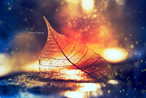 Leaf of ice and fire by Floreina-Photography