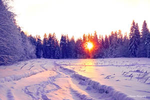 Snowy morning by Floreina-Photography