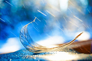 Golden leaf in rain by Floreina-Photography