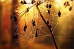 Spider pearls