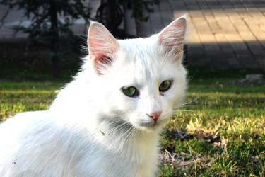 kedi by kuasehfgaiurgh