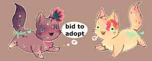 fabulous kittens [CLOSED]