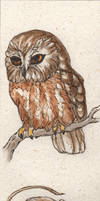 Northern Saw-whet Owl Birdmark