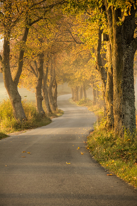 Autumn Road by UNCL3AN74