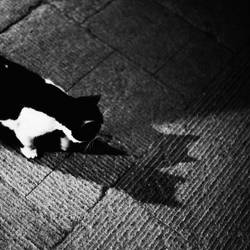 The two shadows of a cat by CHAOKUNWANG