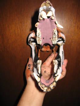 Boar Skull Canvas- Tiger 4