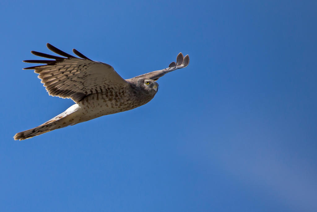 Gliding 1 by Drax242