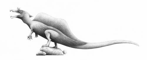 Sigilmassasaurus brevicollis by titanlizard