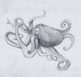 Octopus by Rievil
