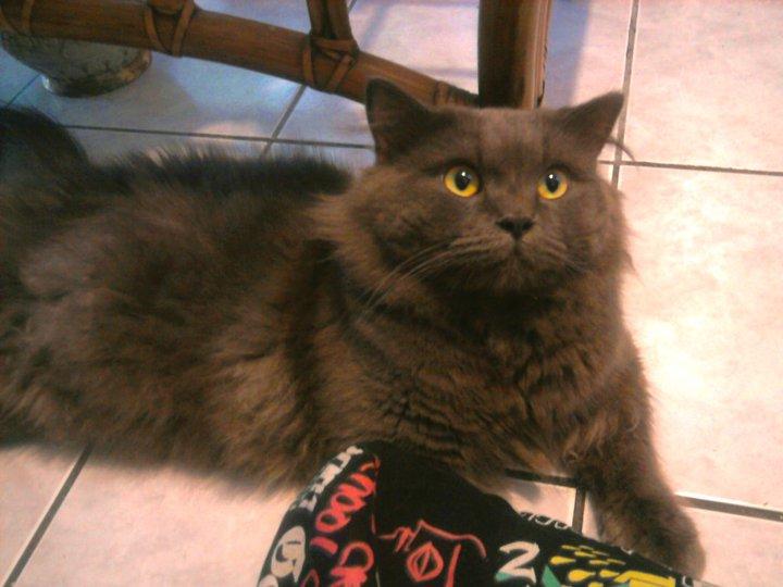 My Cat Jin Jinx by Lolita-Ragdoll