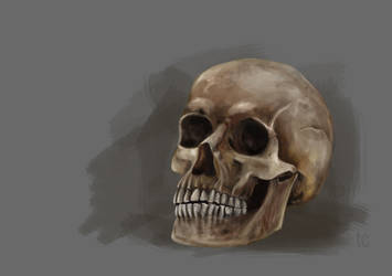Skull study by teocican