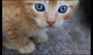 The Baby Cat by bittermarah