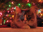 Tas under the Christmas tree by mostejo
