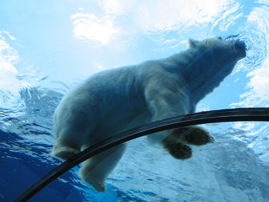 Polar Bear by AllRightTokyoFan