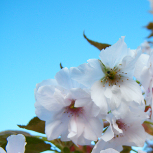 Cherry-Tree-Stock's Profile Picture