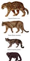 Big cat feline