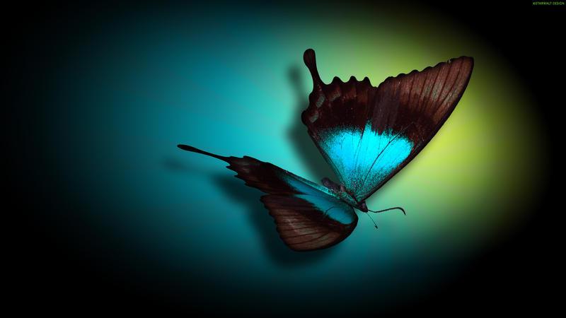 3D Butterfly Wallpaper By StarwaltDesign